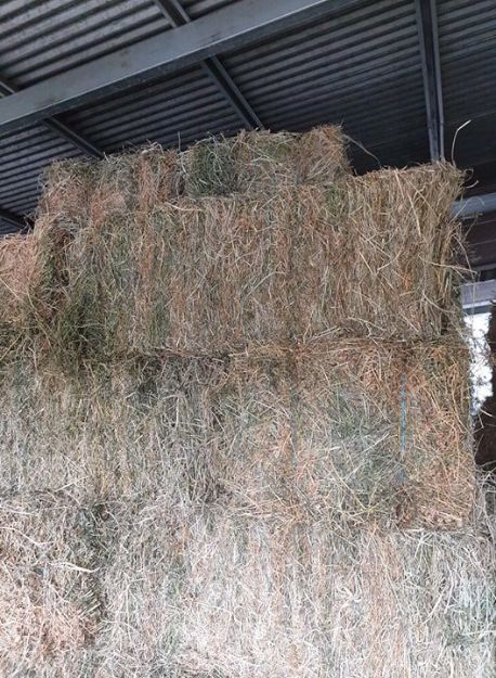 Picture of Grassy Lucerne Square Bales